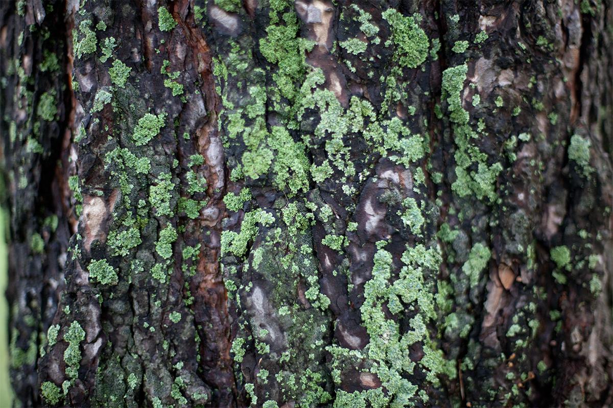 treeBark_01